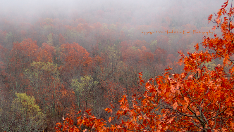 Late Fall Colors - Ozark Mountains, Arkansas 2004